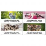 Cuddly Kittens Deluxe Address Labels  (4 designs)