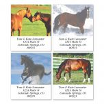 Horse Enthusiast Select Address Labels  (4 designs)