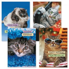 CATtitude Birthday Cards