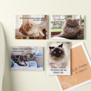 Sassy Cats Magnets
