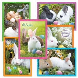 Photo Bunny Easter Greeting Cards Value Pack