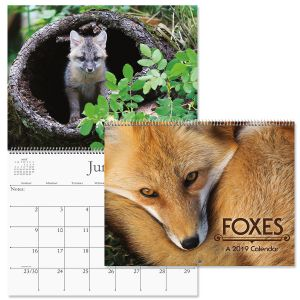 2019 Foxes Wall Calendar