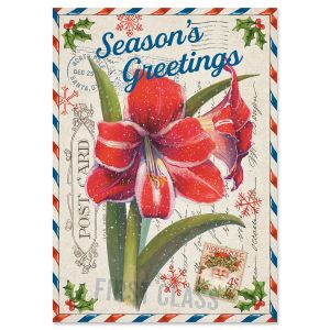Amaryllis Christmas Cards