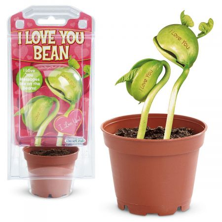 I Love You Magic Bean Plant Kit