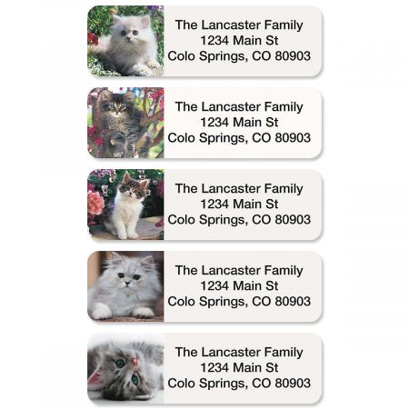 Cute Kittens Rolled Address Labels  (5 designs)
