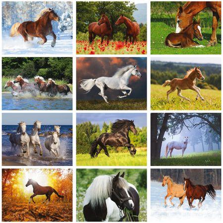 2019 Horses Wall Calendars