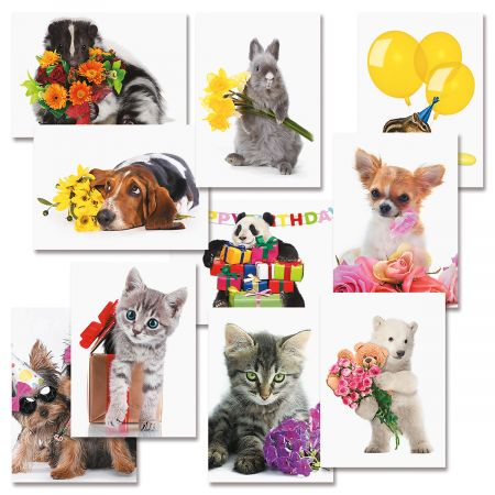 Big Bouquet Animal All Occasion Value Pack