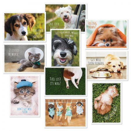 Furry Friends Get Well Cards Value Pack