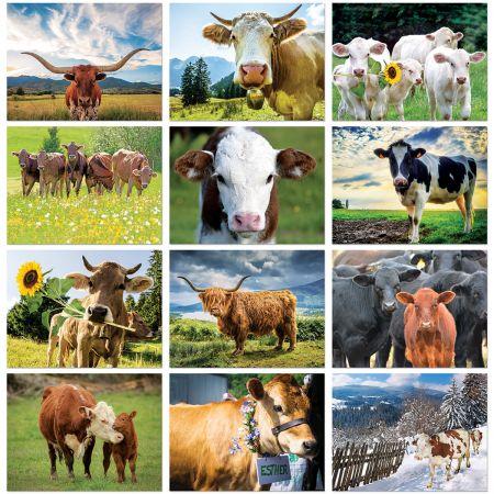 Cow Calendar 2021 2021 Cows Wall Calendar | Current Catalog