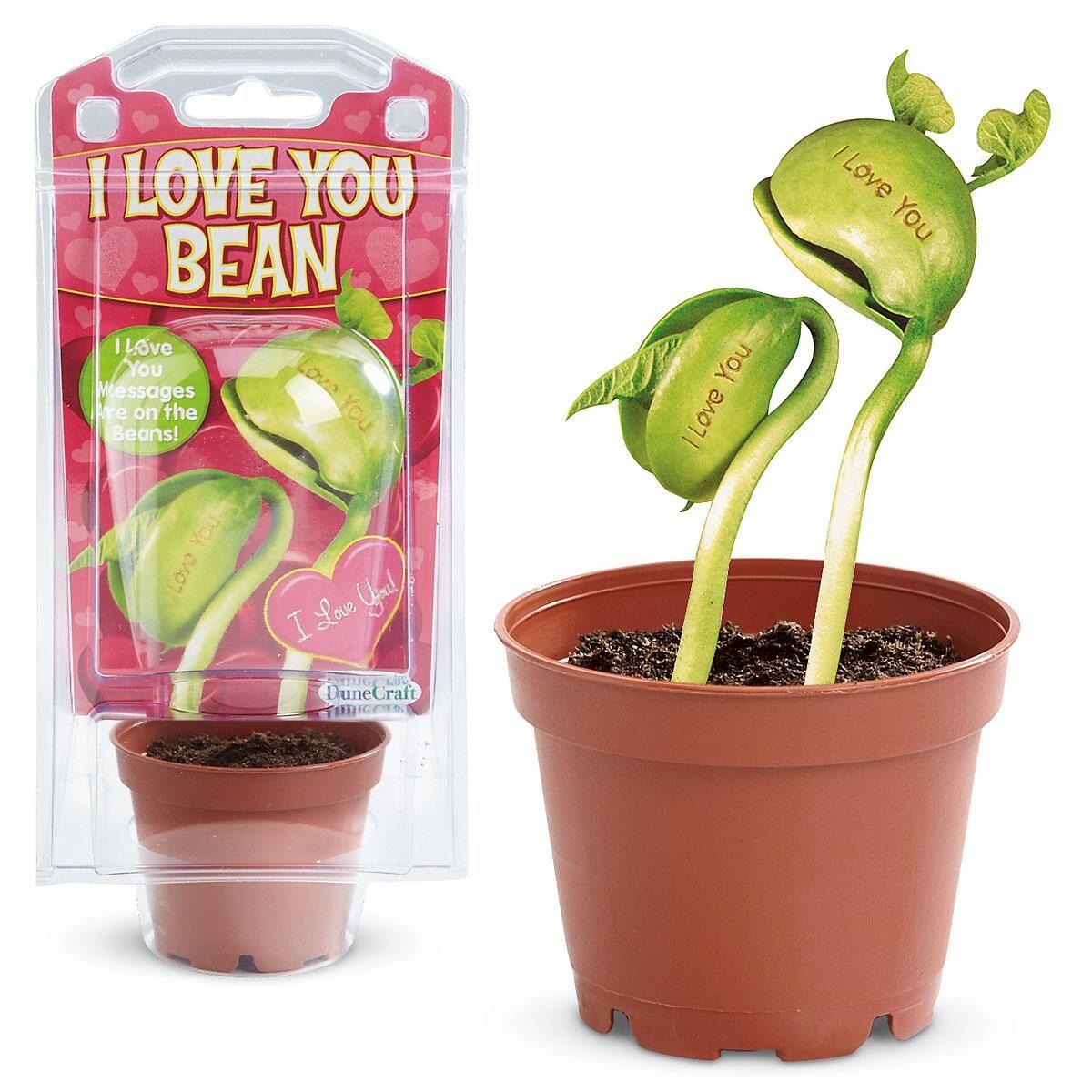I Love You Magic Bean Plant Kit