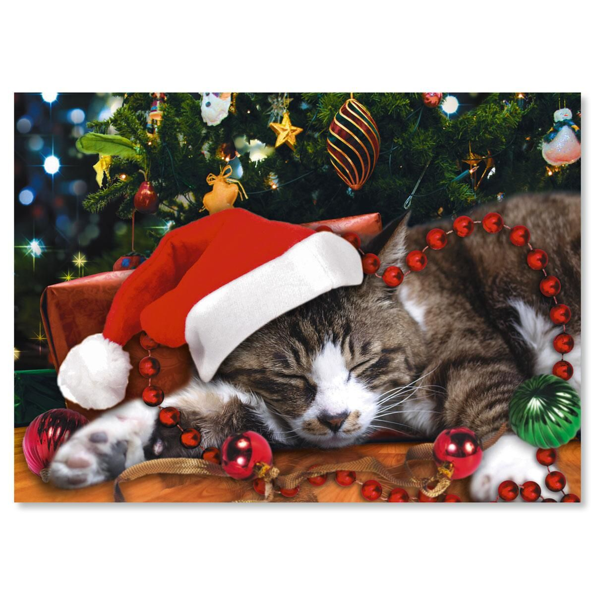Picture This™; Christmas Cat Nonpersonalized Christmas Cards - Set of 18