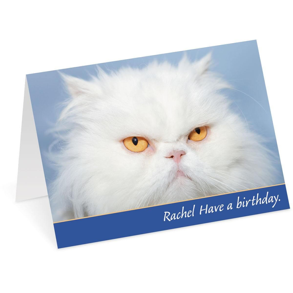 Grouchy Cat Select-A-Card