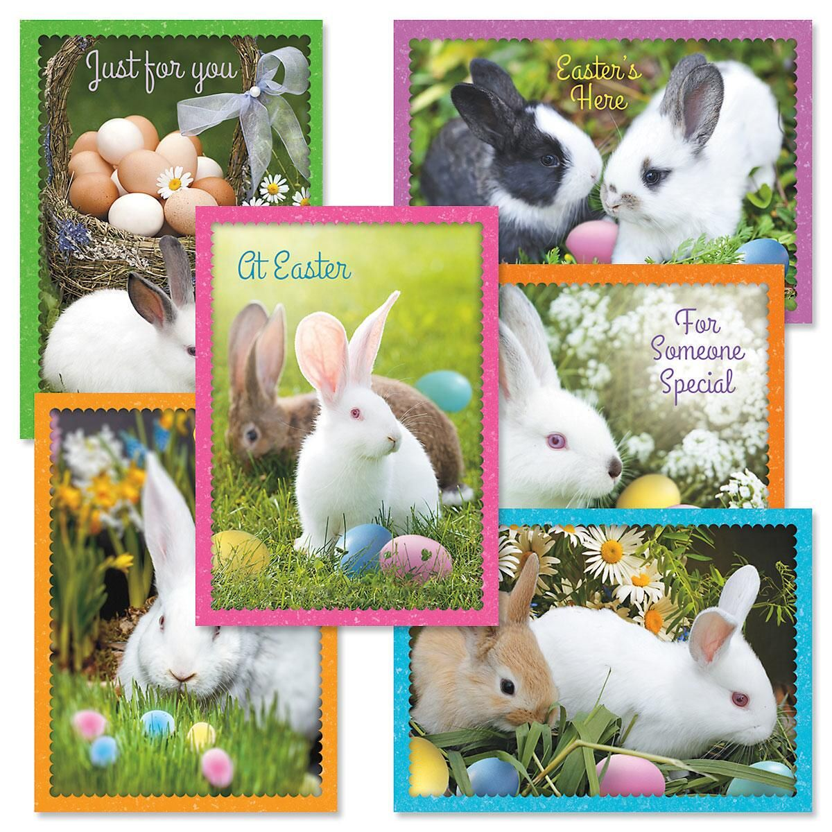 Photo Bunny Easter Greeting Cards Value Pack Current Catalog