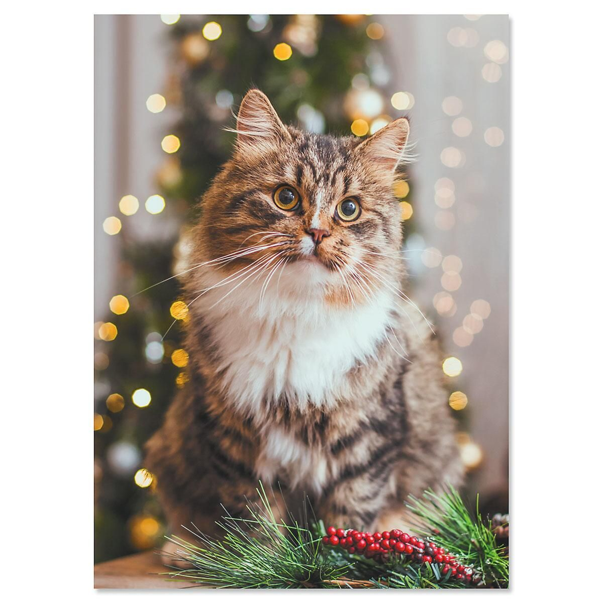 Christmas Cat Nonpersonalized Christmas Cards - Set of 18