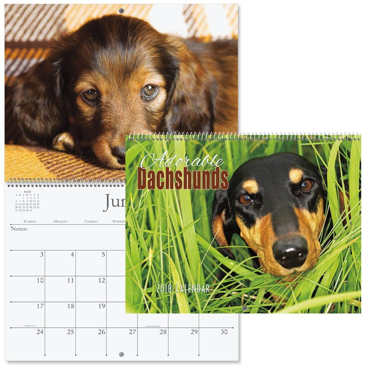 2018 Dachshunds Wall Calendar