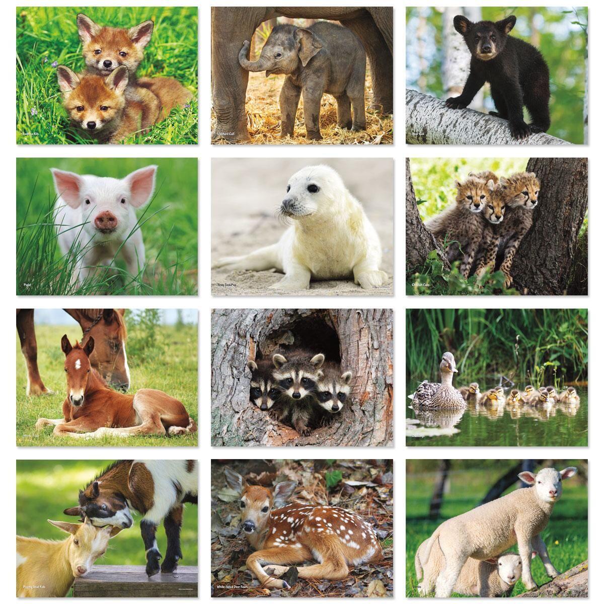 2018 Baby Animals Wall Calendar