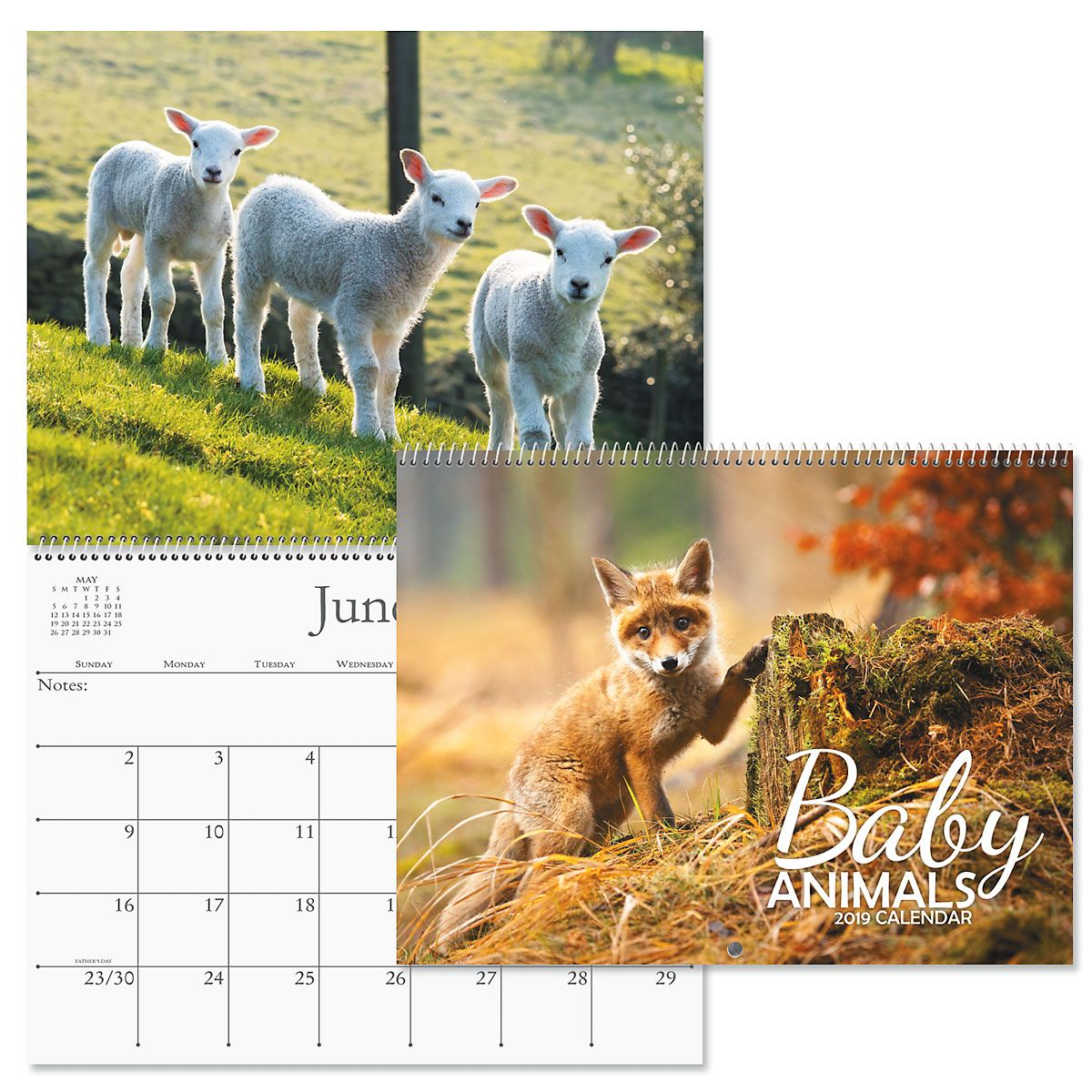 2019 Baby Animals Wall Calendar