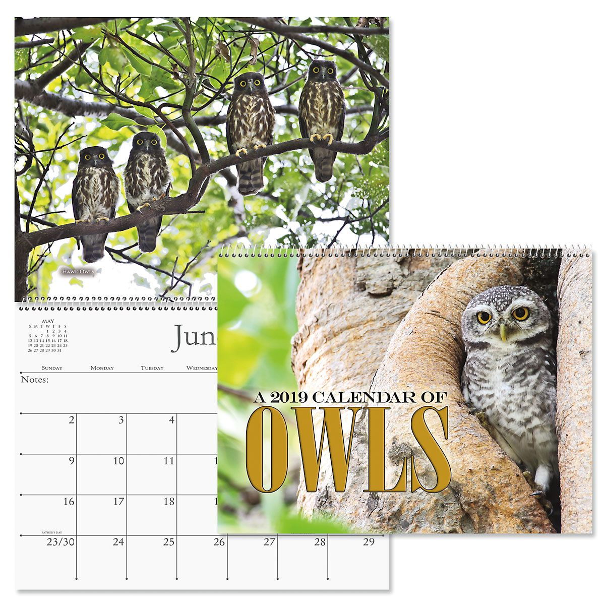 2019 Owls Wall Calendar