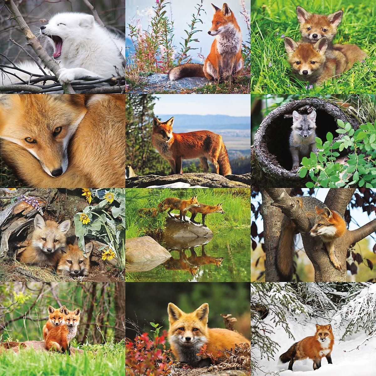 2019 Foxes Wall Calendar