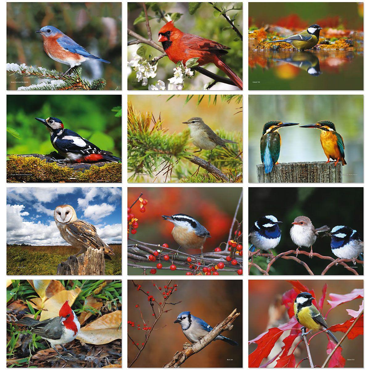 2020 Bird Lovers Wall Calendar