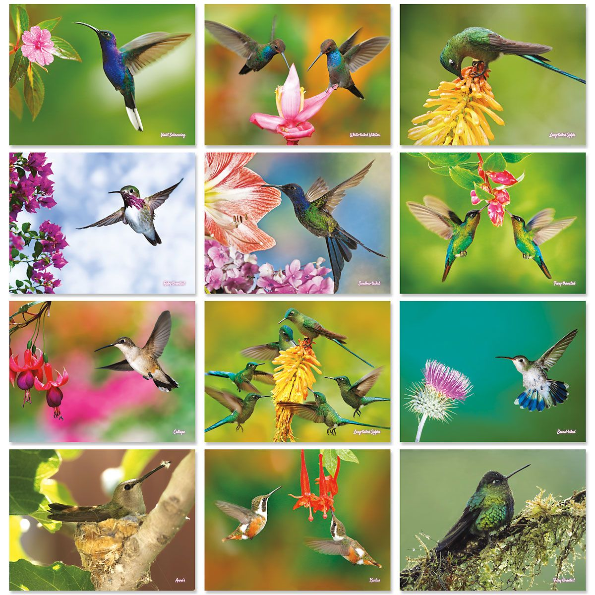 2020 Hummingbirds Wall Calendar