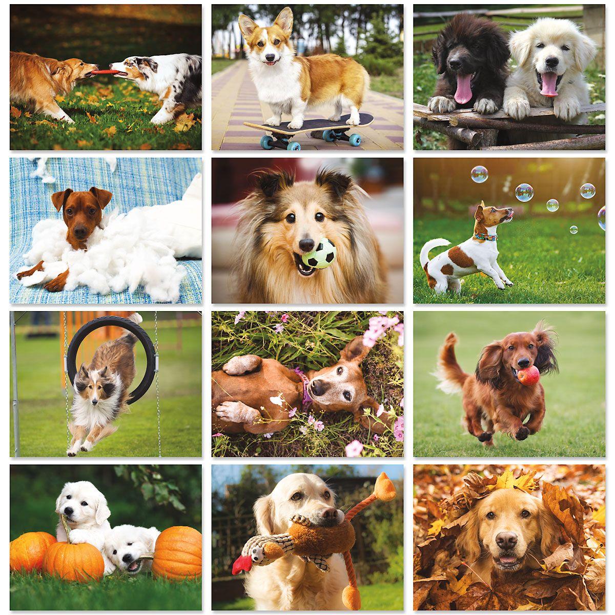 2020 Playful Pups Wall Calendar