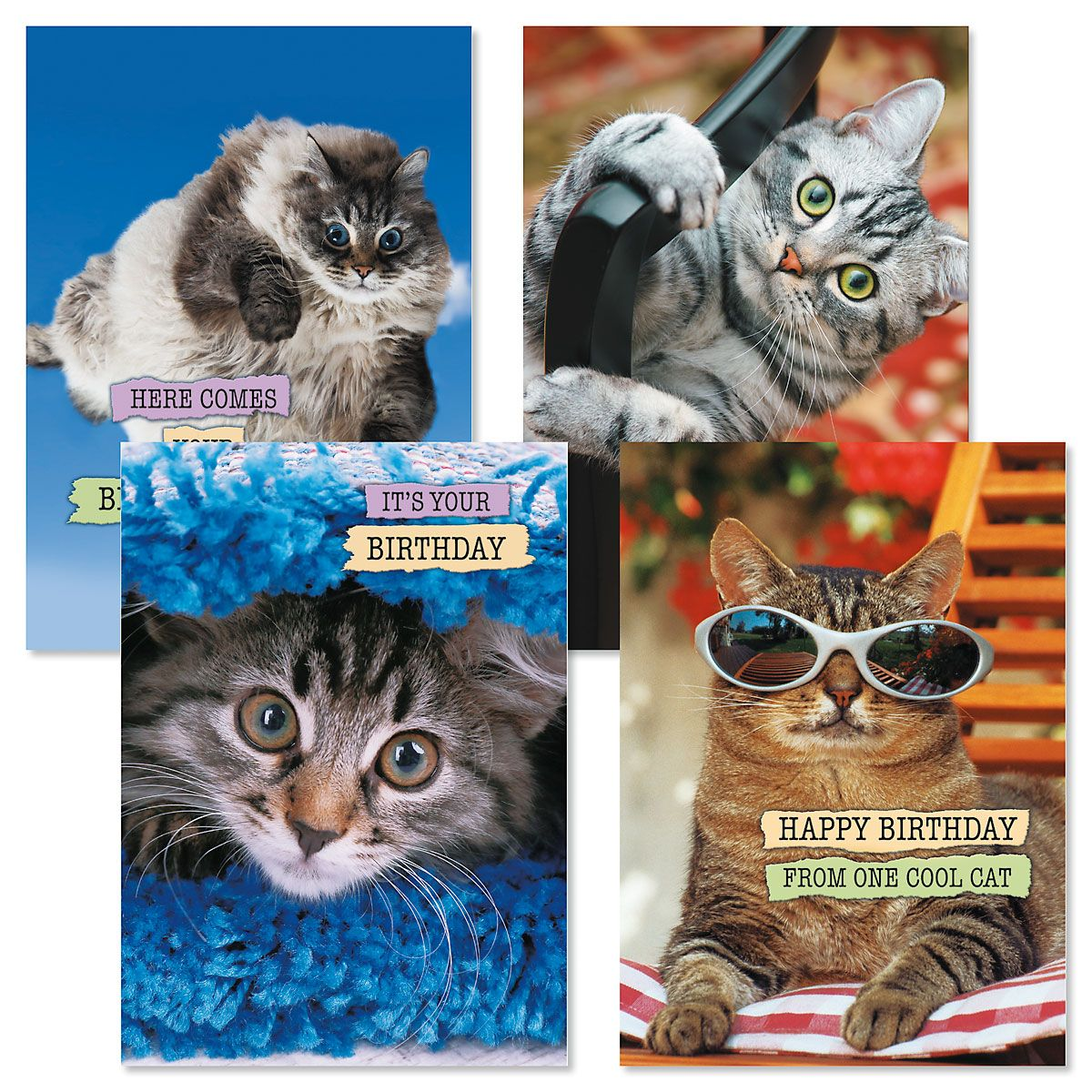 CATtitude Birthday Cards and Seals