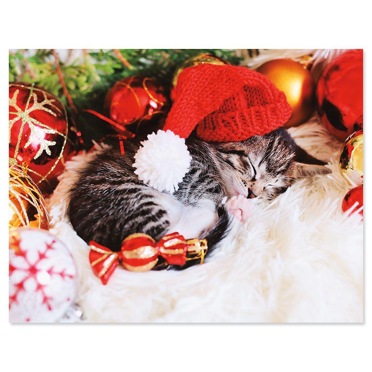 Christmas Kitten Note Cards