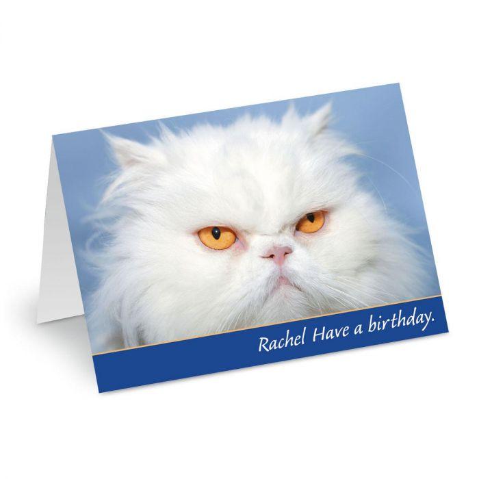 Grouchy Cat Birthday Create-A-Card