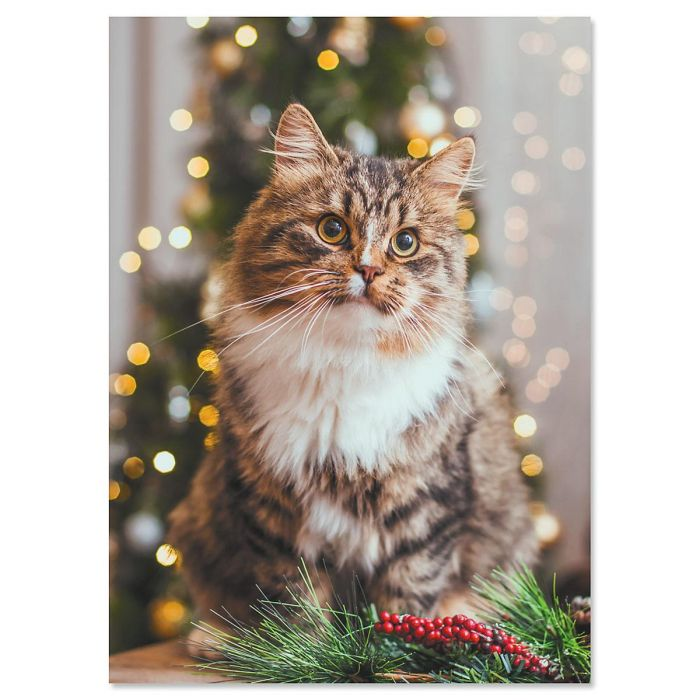 Christmas cat christmas cards current catalog christmas cat christmas cards m4hsunfo