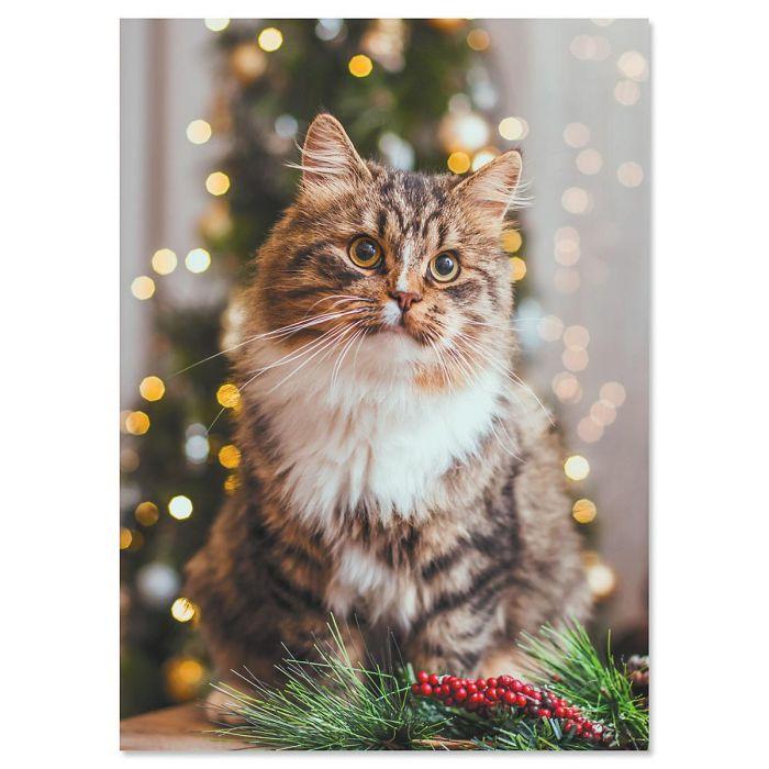 Christmas Cat Christmas Cards