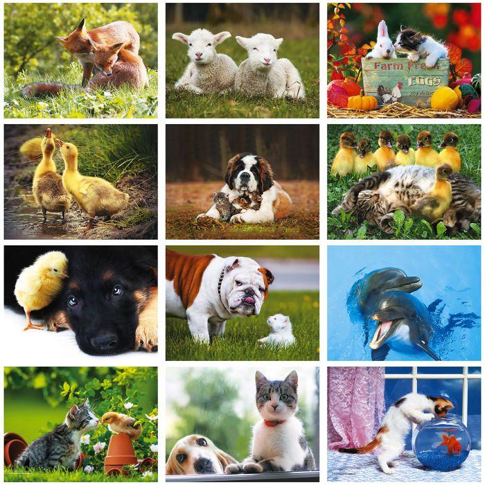 2019 Animal Buddies  Wall Calendar