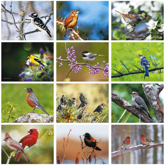 2019 Bird Lovers Wall Calendar