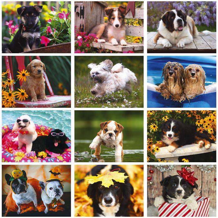 2019 Gentle Hearts Dogs Wall Calendar