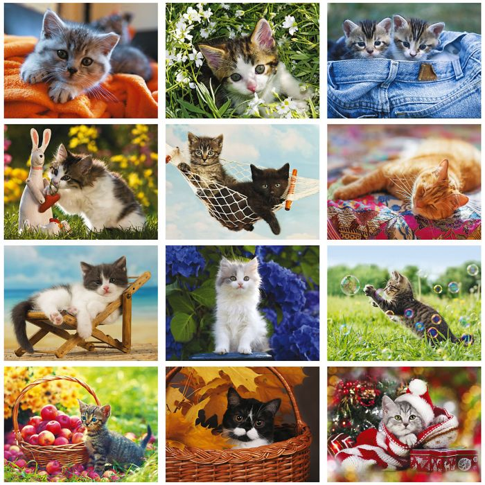 2019 Love Those Cats Wall Calendar