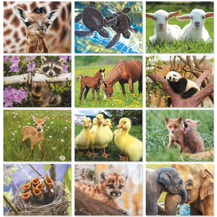 2020 Baby Animals Wall Calendar