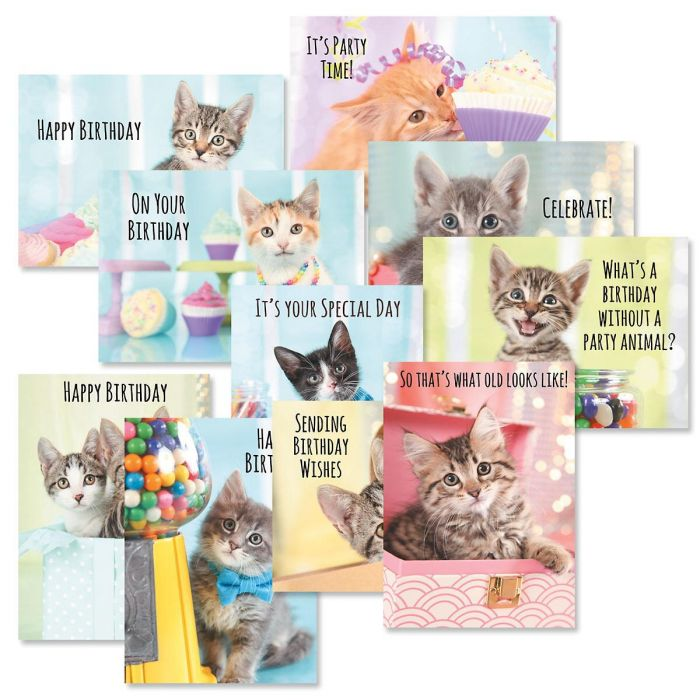 Kittens Birthday Cards Value Pack