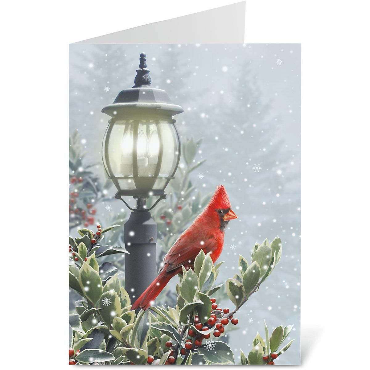 Winter Solitude Personalized Christmas Cards - Set of 72