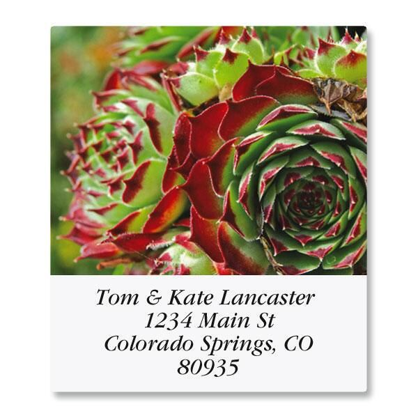 Cactus Flower Select Address Labels  (12 Designs)