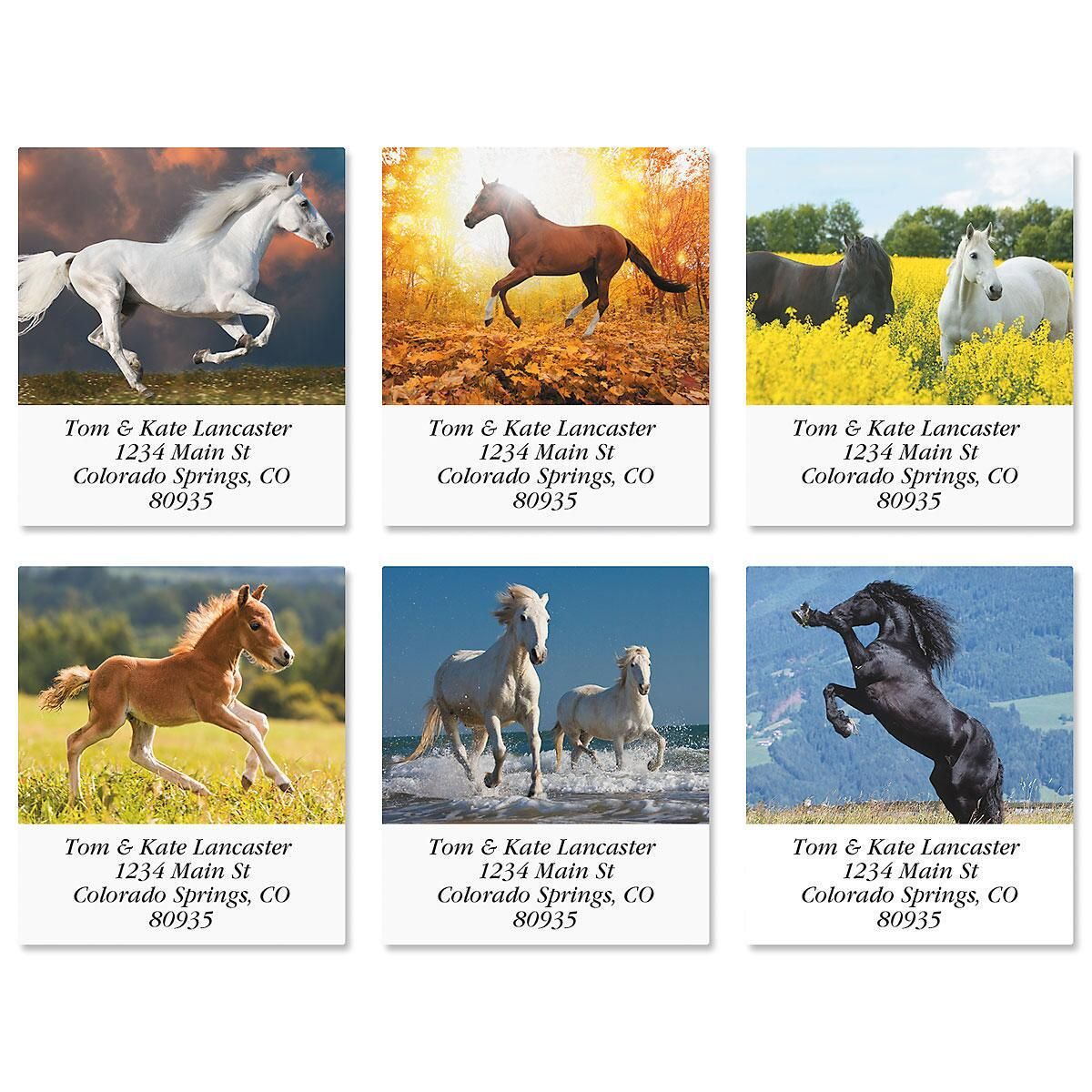 Love Horses Select Address Labels  (6 Designs)