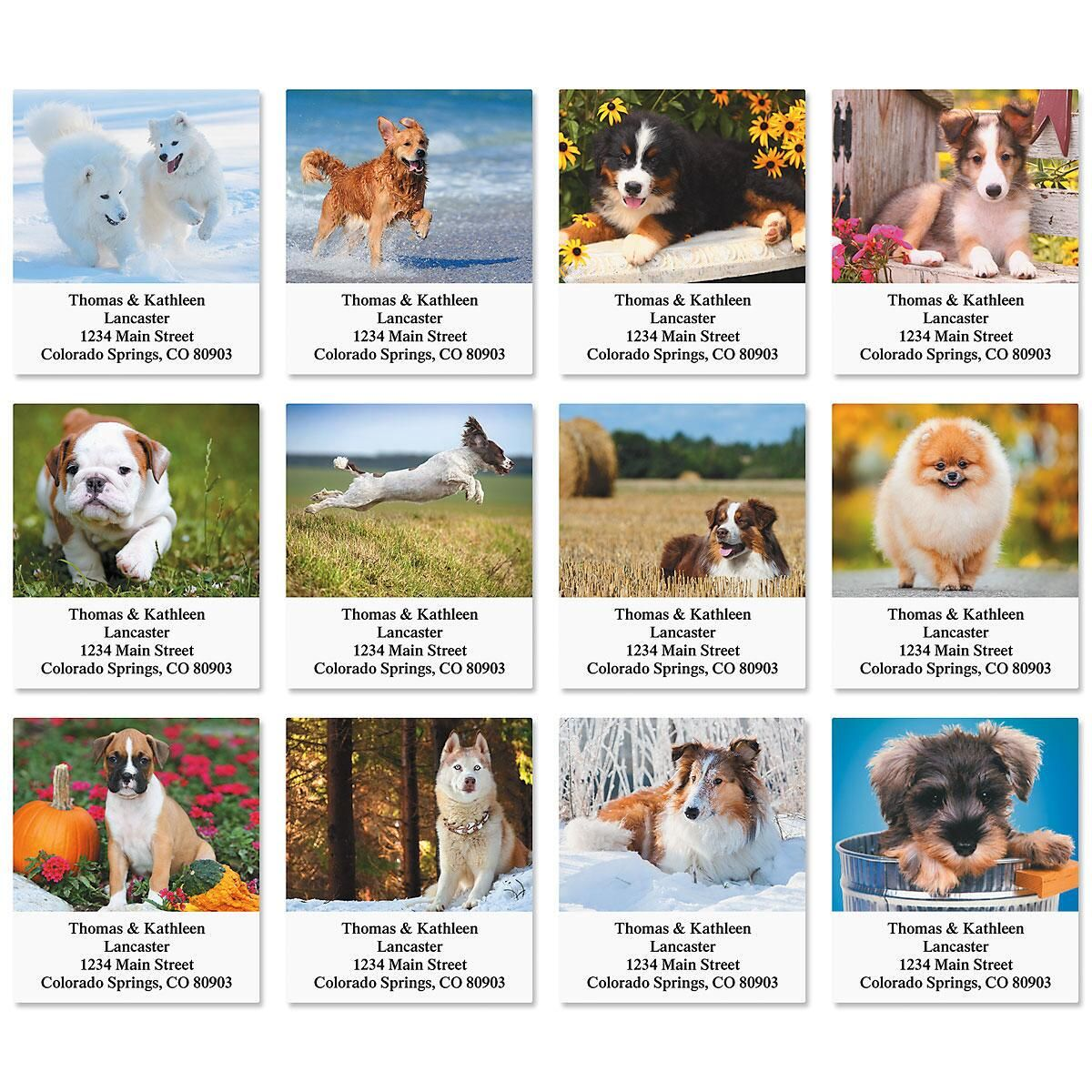 Doggone It! Select Address Labels  (12 Designs)